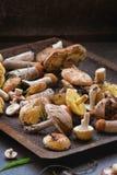Разнообразие грибов леса Стоковые Изображения