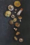 Разнообразие грибов леса Стоковое Фото