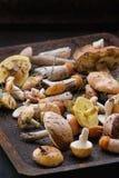 Разнообразие грибов леса Стоковое Изображение RF