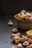 Разнообразие грибов леса Стоковая Фотография
