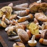 Разнообразие грибов леса Стоковые Фотографии RF