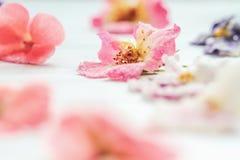 Разнообразие домодельных засахаренных или выкристаллизовыванных цветков стоковая фотография rf