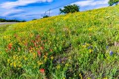 Разнообразие желтые и оранжевые Wildflowers Техаса на стороне  стоковые изображения rf