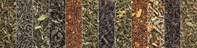 Разнообразие знамени черного, зеленого, красного и травяного чая Стоковое Фото