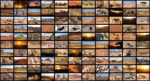 Разнообразие изображения Намибии как большая стена изображения, репортажно-документальные Стоковые Фотографии RF