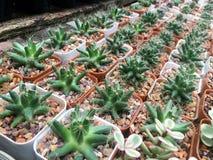 Разнообразие кактуса Стоковые Изображения