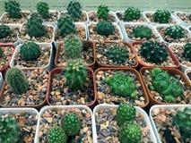 Разнообразие кактуса Стоковая Фотография RF