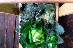 Разнообразие капуст в деревянной корзине на коричневой предпосылке Взгляд сверху сбора стоковое фото