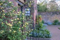 Разнообразие красочные полевые цветки на дисплее в Eastcote расквартировывают сады, исторический огороженный сад поддерживаемый в стоковые фото
