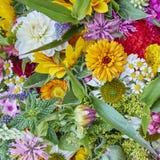 Разнообразие красочных цветков Стоковое Изображение RF