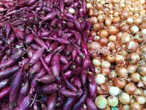 Разнообразие лука в супермаркете стоковые фотографии rf