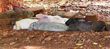 Разнообразие - многократная цепь покрашенные кролики включая белое, серое, Брайна и черные кроликов Стоковая Фотография