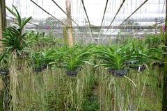 разнообразие орхидеи Стоковое Фото