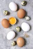 Разнообразие пестротканых яичек птицы Взгляд сверху Стоковые Фото