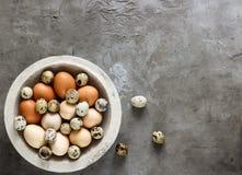 Разнообразие пестротканых яичек птицы Стоковое Изображение RF
