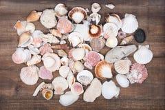 Разнообразие различных раковин моря Стоковое Изображение RF