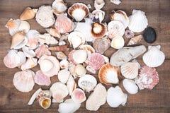 Разнообразие различных раковин моря Стоковые Фотографии RF