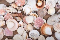 Разнообразие различных раковин моря Стоковое Изображение
