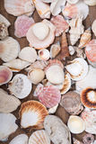 Разнообразие различных раковин моря Стоковое фото RF