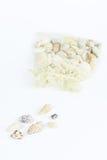 Разнообразие раковины моря Стоковые Фотографии RF