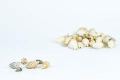 Разнообразие раковины моря Стоковое фото RF
