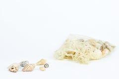 Разнообразие раковины моря Стоковые Изображения RF