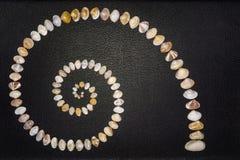 Разнообразие раковины Clam Стоковые Изображения RF