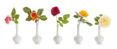 Разнообразие роз в малых вазах Стоковые Изображения RF