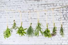 Разнообразие свежий висеть трав Стоковые Фото