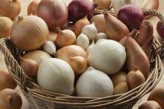 Разнообразие свежих луков в корзине стоковая фотография rf