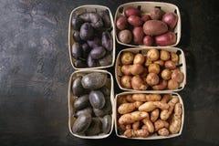 Разнообразие сырцовых картошек Стоковое фото RF