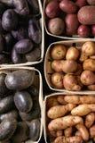 Разнообразие сырцовых картошек Стоковое Изображение RF