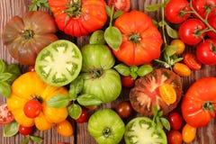 Разнообразие томатов стоковая фотография rf