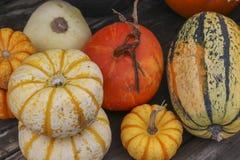 Разнообразие тыквы на заплате тыквы Стоковое Изображение