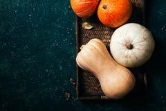 Разнообразие тыкв различных размера, формы и цвета Стоковые Фото