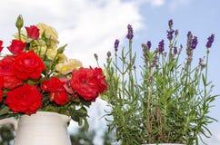 Разнообразие цветков в саде. Стоковое Изображение RF