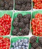 Разнообразие ягод Стоковое Фото