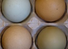 Разнообразие яя других цветов в коробке яйца картона, сфотографированных сверху стоковое изображение