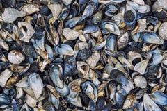 Разнообразие Seashells на пляже Стоковая Фотография RF