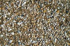 Разнообразие seashells от пляжа на предпосылке песка Seashell стоковые фото