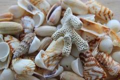 Разнообразие seashells Стоковые Изображения
