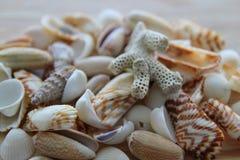 Разнообразие seashells Стоковая Фотография RF