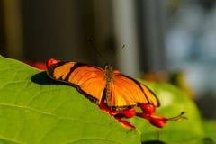 Разнообразия бабочки на ботанических садах Стоковые Фото