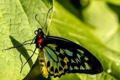Разнообразия бабочки на ботанических садах Стоковая Фотография