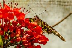 Разнообразия бабочки на ботанических садах Стоковая Фотография RF