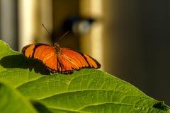 Разнообразия бабочки на ботанических садах Стоковое Изображение