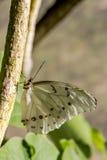 Разнообразия бабочки на ботанических садах Стоковое фото RF