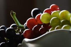 разнообразия виноградины 3 Стоковые Изображения
