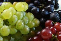 разнообразия виноградины 3 Стоковое Фото