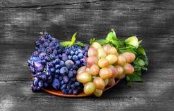 2 разнообразия виноградины Стоковые Изображения RF
